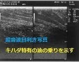 maguro_20echo_201.jpg